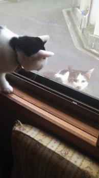 外の猫を気にするやんちゃなシク